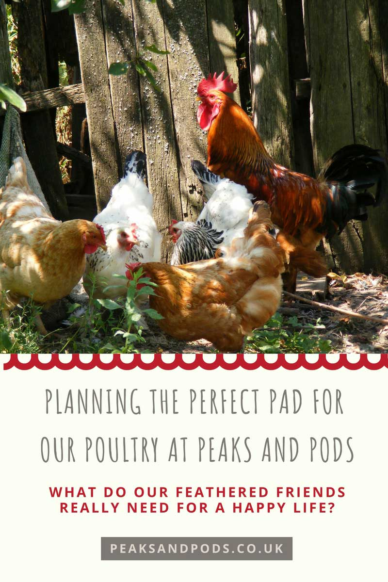 Poultry at Peaks and Pods
